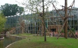 Zware Robinia klimpalen voor de Apen in de ZOO (1)