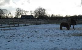 Afrastering paarden wei (5)