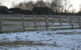 Afrastering paarden wei (6)