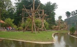 Zware Robinia klimpalen voor de Apen in de ZOO (2)